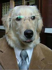 dog-in-suit-by-matt512