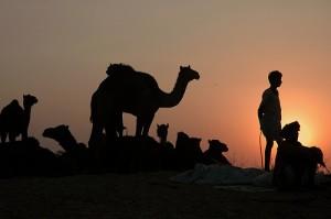 camel trader by Koshyk