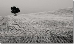 full retirement age has nothing to do with a lone tree in a field.