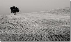lone tree by Jule_Berlin