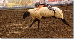 800px-Hold_on_to_the_sheep