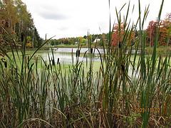 Ossekeag Creek Marsh